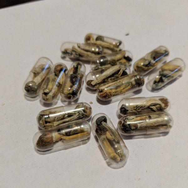 micro dosing psilocybin capsule shroom capsules